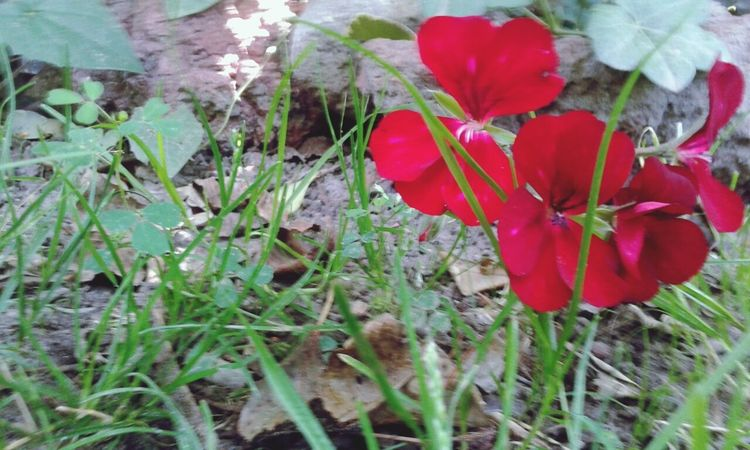 Red Flowers :3 Parque Botanico