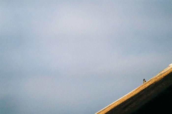 # #35mmphoto #analogphotography #canon #35mmfilm #worldcaptures #35mm #skate #instagramjapan #35mmphotograph #japan #analogue #vsco #film #analogic #kodac #analogfilm #analogphotograph #analogcamera #35mmcamera #35mmphotography #analog #films #vscocam #nord #analogue #film #JustMe #lips #love #smile #pink #cute #pretty #Nature  #sunset #sun #clouds #skylovers #sky #nature #beautifulinnature #naturalbeauty #photography #landscape The Great Outdoors - 2017 EyeEm Awards