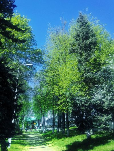 Tree Green Color Nature Day Beauty In Nature Pskov 🏡 Cloud - Sky Sky Building Exterior Travel Destinations History Architecture