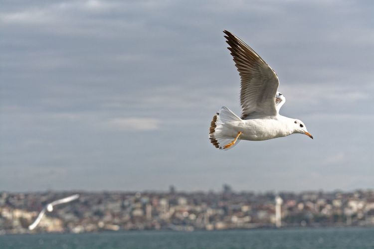 Low angle view of seagull flying above sea