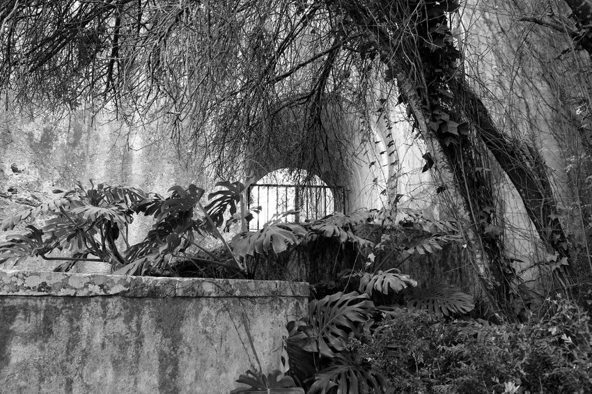 Palace Garden Black & White Greenery Historical Site Black And White Minimalist Blackandwhite Minimalobsession EyeEm Blackandwhite Photography Bnw Eye4photography  EyeEm Best Shots EyeEmBestPics Closed Gate Trees Arch Arquitecture EyeEm Nature Lover EyeEm Gallery Taking Photos at Palácio Do Marquês De Pombal Portugal