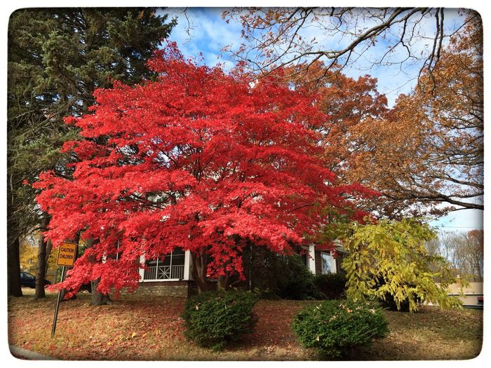 Fall Colors Trees Red EyeEmBestPics Colors Nature WOW Lovely Weather Enjoying The Sun Hugging A Tree