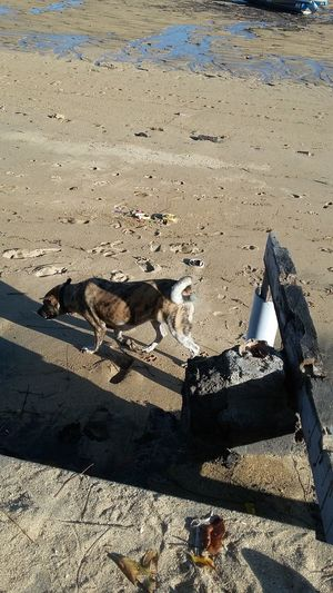 Dog, Sands and