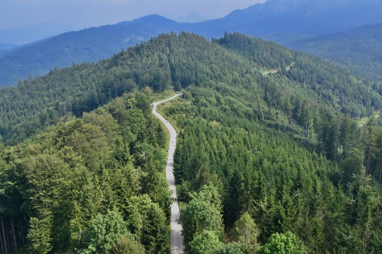 High angle view of road amidst trees in forest