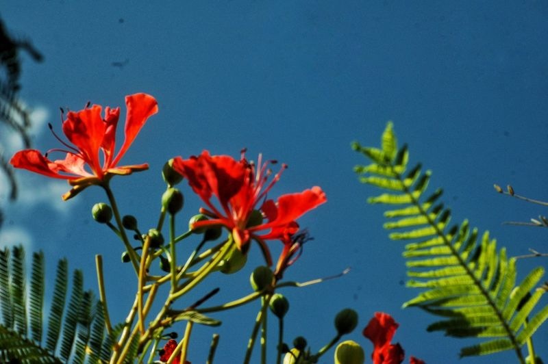Flower Nature Beauty In Nature Growth Red Plant Blue Close-up Petal Freshness Fragility No People Day Water Flower Head Outdoors Sky