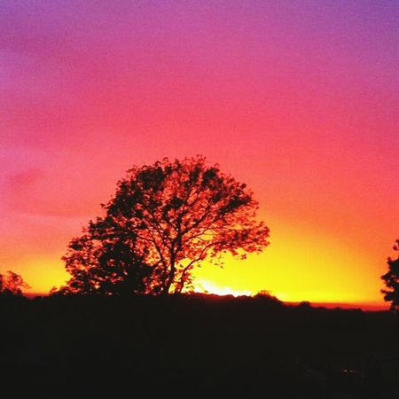 Sunset Camping Tents Trees On A Hill Photography Colour Colourful Bright Beautiful Pretty Nature Summer Season  Holiday Warm Weather Quiet Tranquility Scenics in South Devon