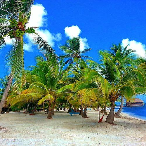 Ambergrisecaye Belize  Togobackandstartover Onecanonlydream .
