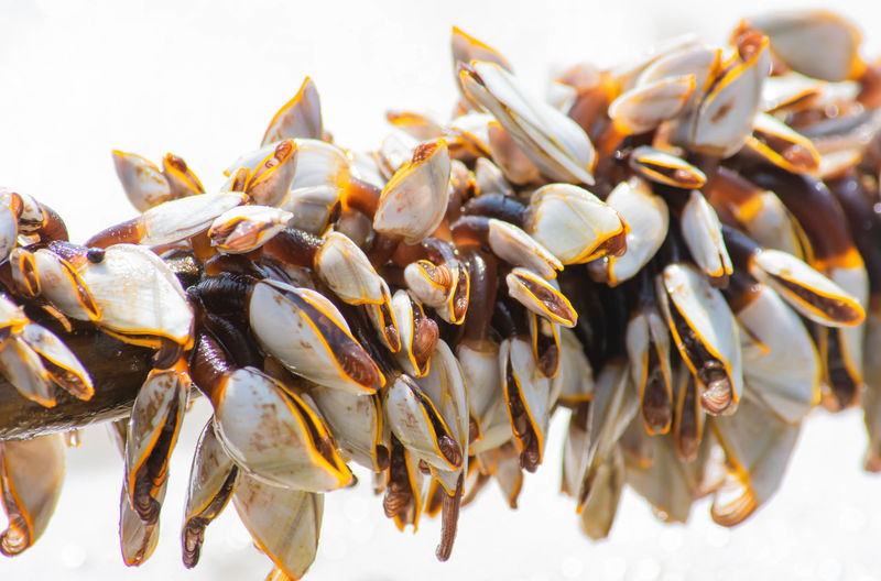 High angle view of shells on white background