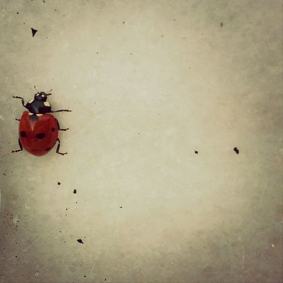 Uç uuuç :@ End To End Insect Spotted °•`▪