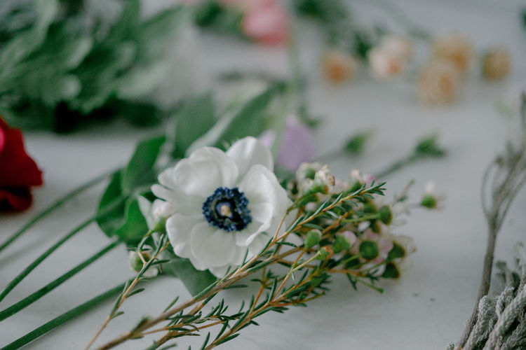 Close-up of white flower anemone on florist table