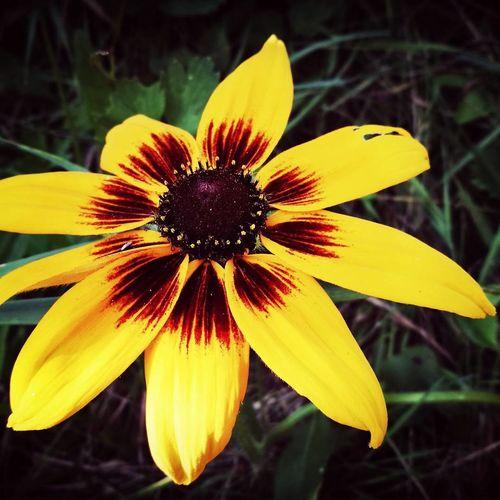 Weekend Flower Beauty In Nature Piotrków Trybunalski