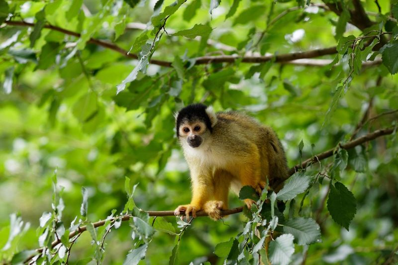 Monkey Business A Day At The Zoo Tree Animal Plant Animal Themes One Animal Animals In The Wild Animal Wildlife Primate