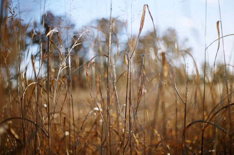 Change Close-up Cold Temperature Cold Winter ❄⛄ Dry Field Focus On Foreground Grass Growth Hip Hop And House Fusion Workshop With BranuOne (22nd Of November, 2014) Late Evening Leaf Nature No People November,cold Plant Selective Focus Stem Sunset Twig