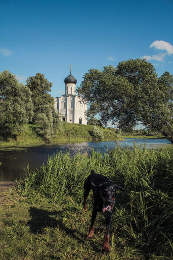 Cathedral Cathedral Of Saint Demetrius Cathedral Of Saint Domnius Church City Vladimir Demetrius Dog Old Orhodox Peace Russia Saint Demetrius Summer Vladimir Water
