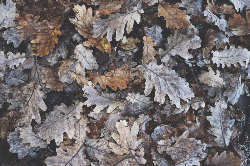 Fall 🍂 Full Frame Backgrounds No People Day Nature Abundance Pattern High Angle View Plant Part Outdoors Brown