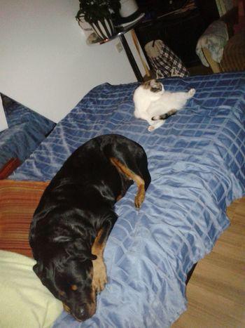 Meine Katze Mit Meinem Hund Bei Mir Zu Hause Dog Life Katze Muss Man Sein Lilli Mit Freya gemütlich mein Bett..ich weiß!!