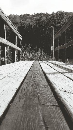 Lake View EyeEm Best Shots The Week Of Eyeem Trees Tree Floating Bridge Parallel Lines