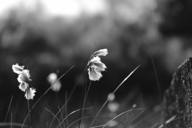 Beauty In Nature Taking Photos Sotenäs Kungshamn Sweden Monochrome Eyeem Sweden Blackandwhite Fujifilm Landscape Nature Eyeem Monochrome Eyeem Black And White Photography Hemma Bäst Black And White Nature Sverige Svensk Natur Västkusten WestCoast EyeEm Nature Lover Growth Outdoors No People Beauty In Nature