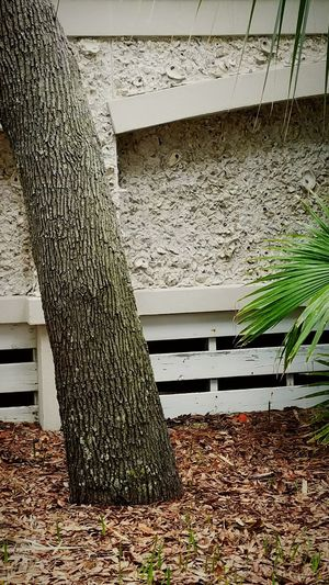 Shell Wall. Shells Building With Shells Architecture Built Structure House Homes Hilton Head Island Hilton Head Island, SC Hilton Head SC Tropical Palm Tree Bark Tree Trunk Textures And Surfaces Beach Beach Photography Tree Mulch Wall Neutral Neutral Colors Residence Outdoors