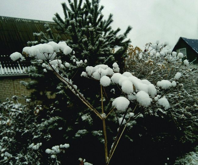 Tree Snow No People Nature Winter Day Cold Temperature Outdoors Growth Branch Close-up