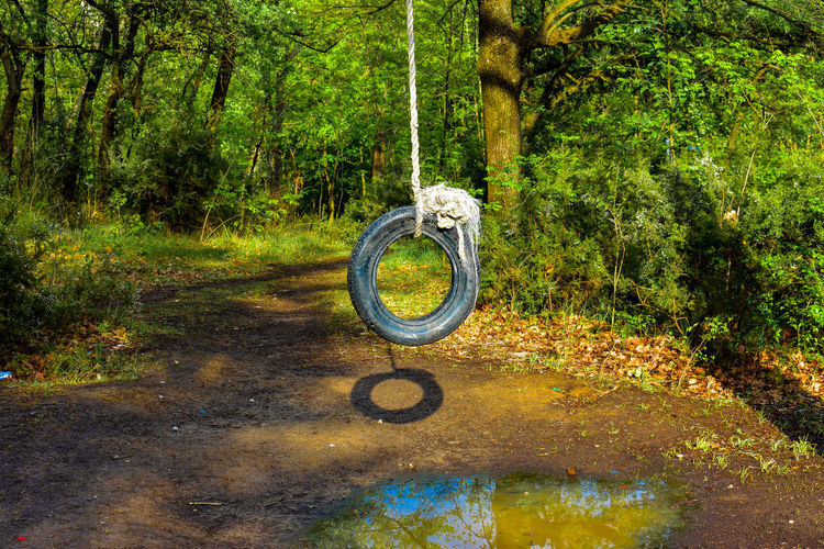 Tires Greenery Scenery Green Nature Outdoor Breathing Space Waterfront Trees And Nature Tranquil Scene Playing Outside Into The Woods Water Rope Circle Outdoor Play Equipment Growing Blooming Playground Tied