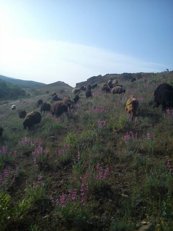 Sheep Flowers Hi! Iran♥ Taking Photos Biutiful Animal Photography Biutifull Photo