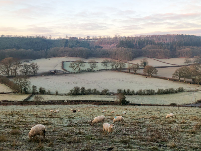 Cold winter morning landscape in Shropshire Animal Animal Themes Livestock Group Of Animals Sky Mammal Landscape Plant Domestic Animals Cloud - Sky Environment Beauty In Nature Vertebrate Sheep Nature Domestic Scenics - Nature Tree Land Pets No People Outdoors Herbivorous