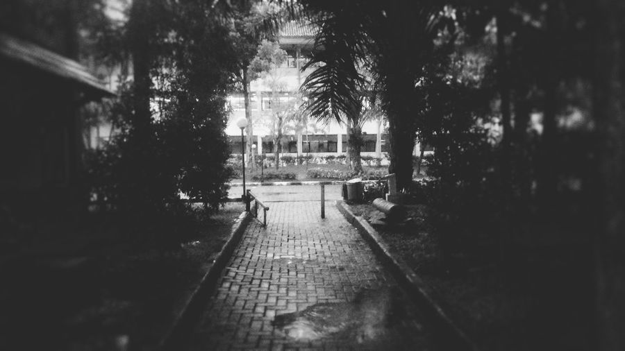 Blurry Afternoon Outdoors Phoneography