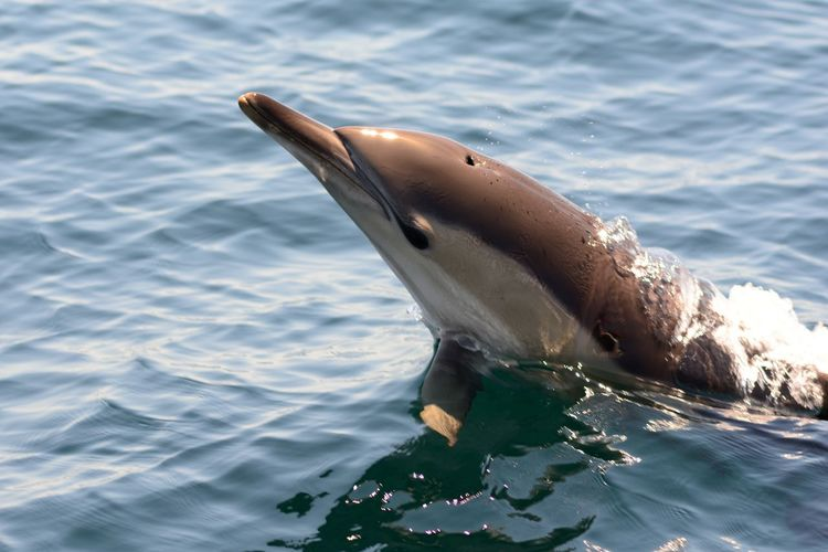 Amazing Animals Check This Out Close-up Day Dolphin Dolphins Eye4photography  EyeEm Best Shots EyeEm Best Shots - Nature EyeEm Gallery EyeEm Nature Lover EyeEmBestPics Nature Nature Photography Nature_collection Naturelovers No People Outdoors Portrait Sea Taking Photos Water Water_collection Wildlife