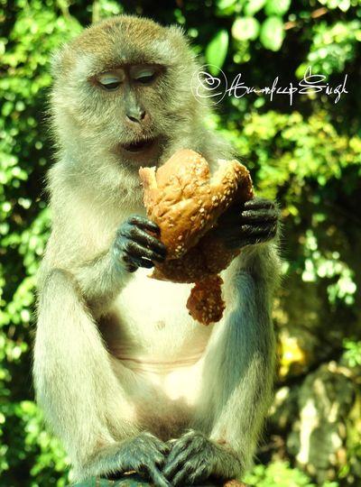 Everyday Joy What's For Dinner? Monkey Artic Monkeys The Great Outdoors - 2015 EyeEm Awards The Foodie - 2015 EyeEm Awards The Moment - 2015 EyeEm Awards The Traveler - 2015 EyeEm Awards
