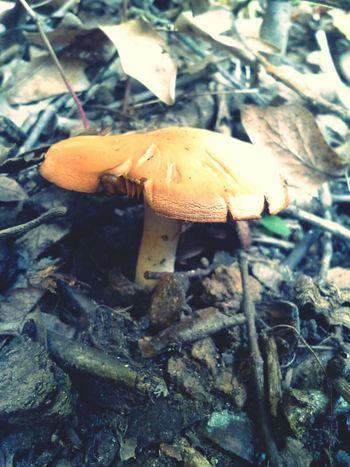 Mr.Mushroom Enjoying Life