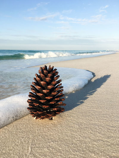 Pine cone and surf Surf Beach Beauty In Nature Day Horizon Over Water Nature No People Outdoors Pine Cone Sand Scenics Sea Shore Sky Sunlight Tranquility Water Wave