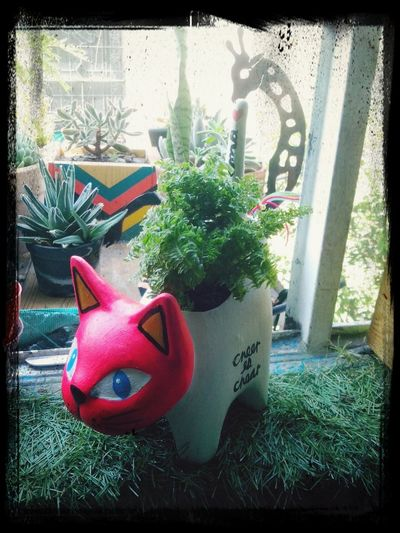 Catplanter Hecho A Mano Laguna First Eyeem Photo