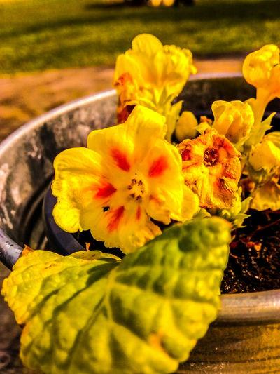 Sunny Day Flowers Walking Alone... Howtimeflies