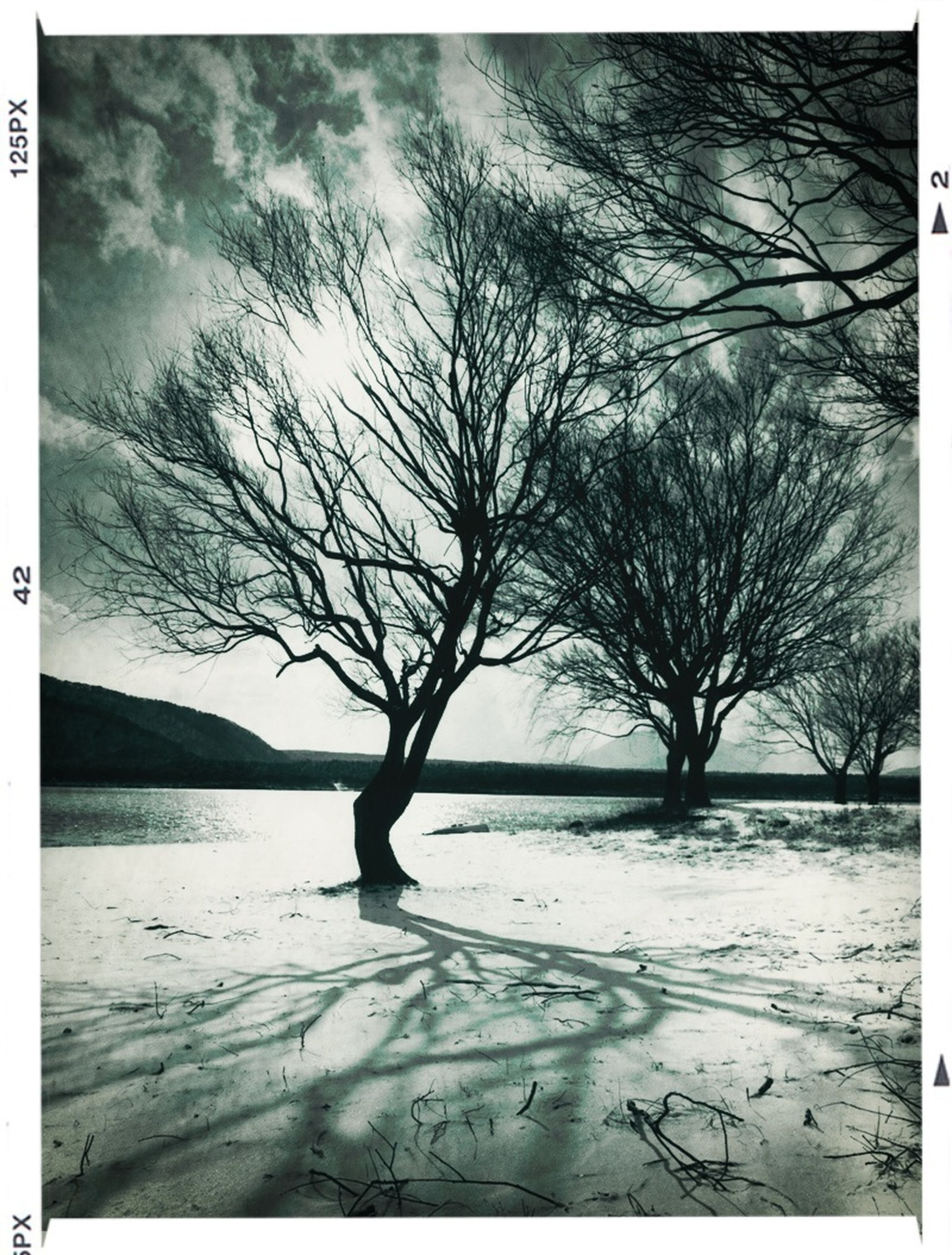 bare tree, snow, transfer print, winter, tree, cold temperature, tranquility, tranquil scene, branch, auto post production filter, landscape, nature, season, scenics, beauty in nature, weather, sky, tree trunk, field, non-urban scene