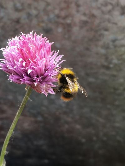 Busy bee on