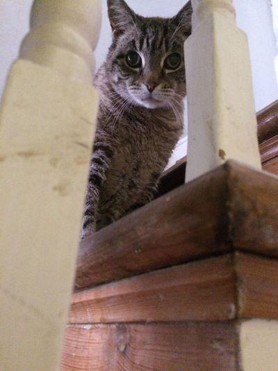 Millythecat Cat Pets