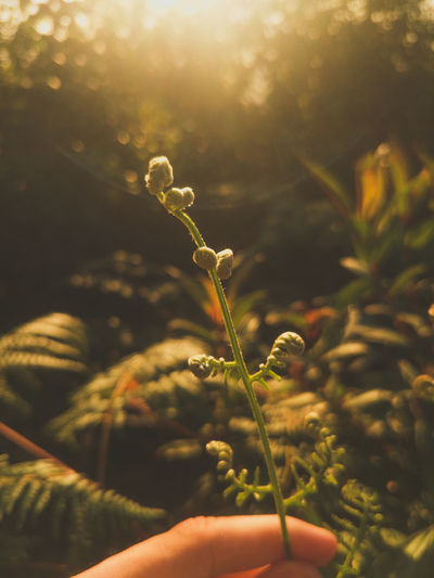 Human Hand Holding Tree Agriculture Close-up Plant Blooming Bud Sepal Plant Stem Fragility Poppy Flower Head Botany New Life Plant Life Growing Petal In Bloom Leaves Stem Leaf Vein Fall Pollen