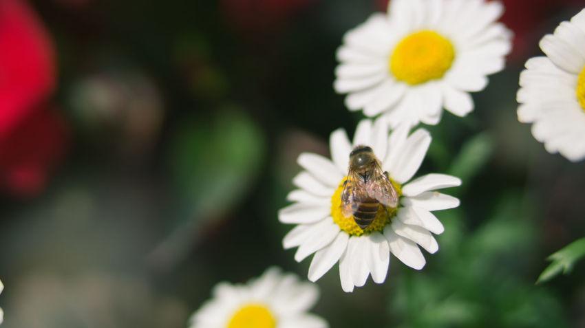 Bee Flowers Growth Guangzhou Macro Macro Photography Plant Traveling