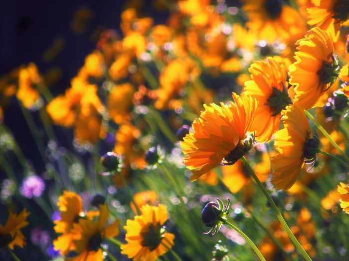Nature Sunlight Close-up Flower Flower Head Flowering Plant Nature No People Outdoors Plant Yellow