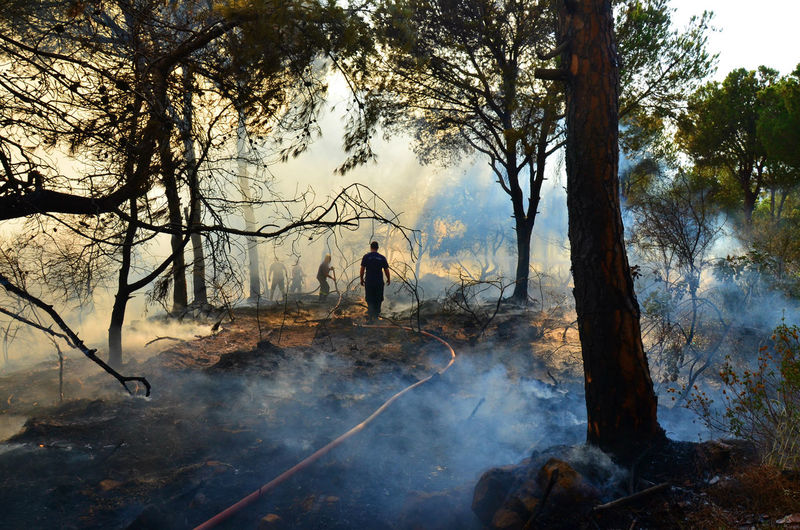 Firefighters Amidst Smoke At Forest