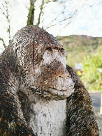 Tree Trunk Outdoors Close-up Animal Themes Go Ape Wood Art Forest Aberfoyle