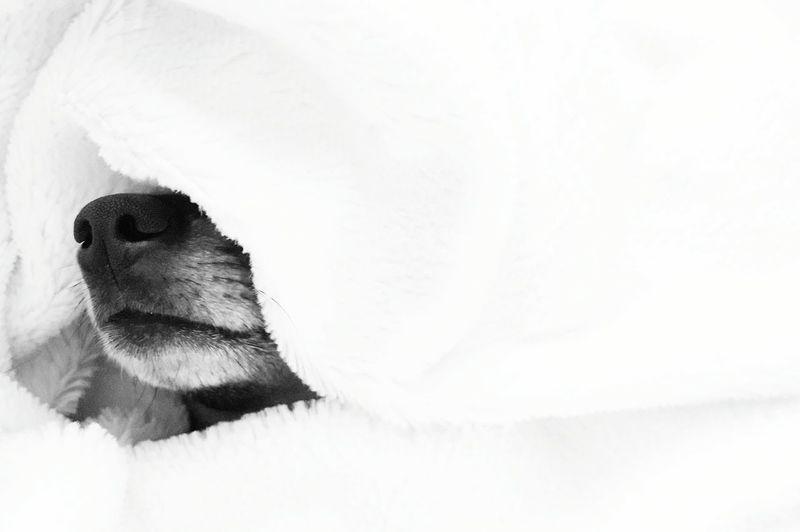 Close-up of lizard on snow