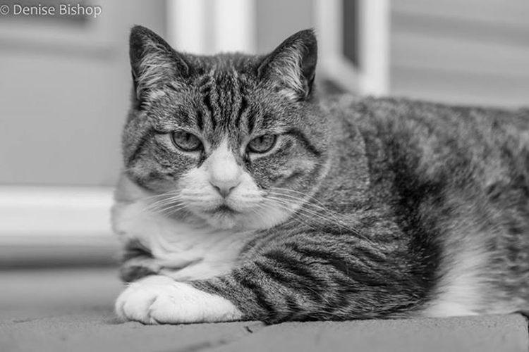 Blackandwhite Black And White Black & White My Backyard Oasis My Cat Cat Cats Nature On Your Doorstep Nobody puts Baby in the corner!