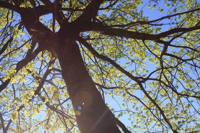 Tree Treeoflife Sunshine Spring Springtime Blooming Bourgeons Branch Branches