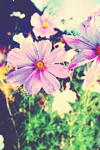 Fleur. First Eyeem Photo