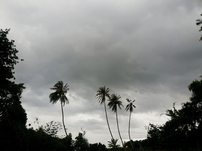The rain is coming . Rainy Days Natural Contryside In Chiangmai Thailand