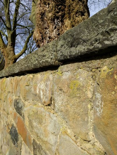 Old Wall in Sunshine Covered With Moss Moss Rock s Stone Wall Stone Tree No People Textured  Beauty In Nature Close-up Green Wall Structure And Nature Sunlight Backgrounds Outdoors Full Frame Day Nature Low Angle View Sky Strukture
