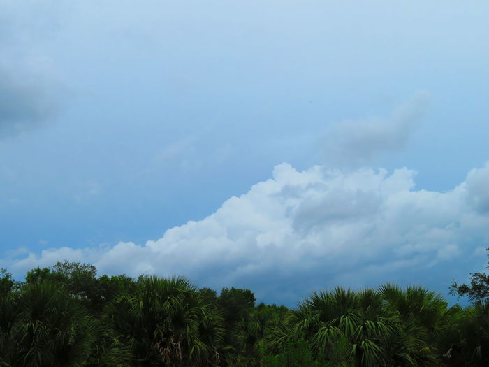 Florida - stormy weather Tree Blue Forest Sky Cloud - Sky Tropical Tree Palm Tree Palm Leaf Frond Tropical Climate Storm Cloud Cloudscape Tree Area