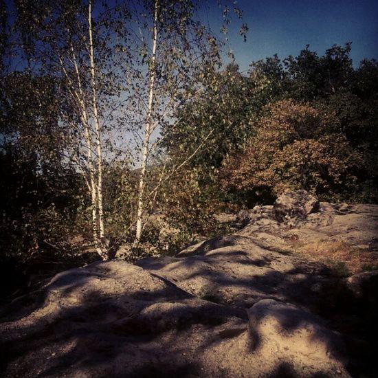 Már csak egy sámán hiányzik... Sacredplaces Shaman Saman Ritual nature trees tree rock rocks mountains mountain landscape Balaton Hungary igers instagrammers instagood webstagram mik autumn